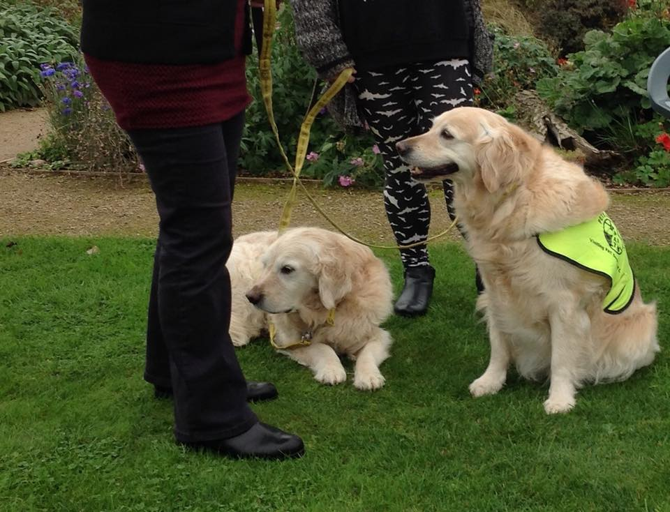 Two of the therapy dogs at CARE